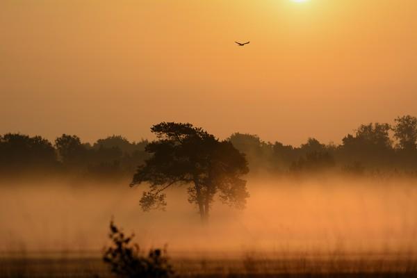 zonsopkomst, malpie, Valkenswaard, natuurfotografie, landschapsfotografie, natuur, landschap, Rosco Pas, Nature in focus, fotograaf, natuurfotograaf