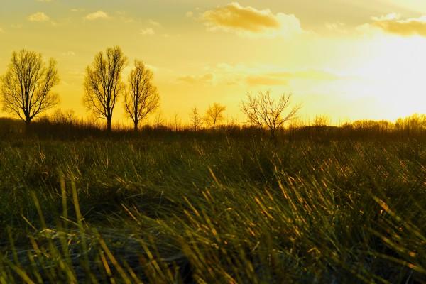 zonsondergang, vlieterdijk, Bergeijk, natuurfotografie, landschapsfotografie, natuur, landschap, Rosco Pas, Nature in focus, fotograaf, natuurfotograaf