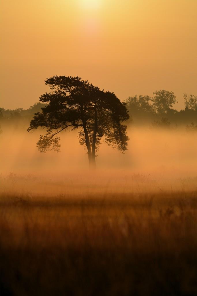 zonsopkomst, malpie, natuurfotografie, landschapsfotografie, natuur, landschap, Rosco Pas, Nature in focus, fotograaf, natuurfotograaf