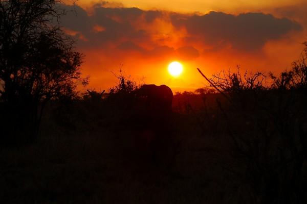 olifanten, zonsondergang, Afrika, Tanzania, natuurfotografie, wildlife fotografie, dierenfotografie, natuur, wildlife, dieren, Rosco Pas, Nature in focus, fotograaf, natuurfotograaf