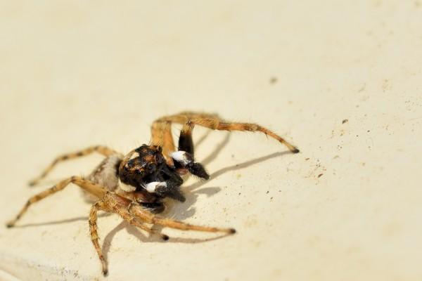 spin, macrofotografie, natuurfotografie, natuur, insecten, Rosco Pas, Nature in focus, fotograaf, natuurfotograaf