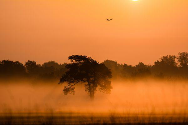 malpie, roofvogel, Valkenswaard,natuurfotografie, landschapsfotografie, natuur, landschap, Rosco Pas, Nature in focus, fotograaf, natuurfotograaf